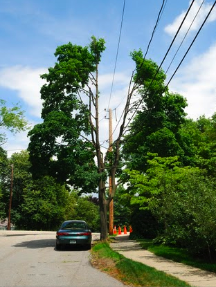 NSTAR utility pruning example